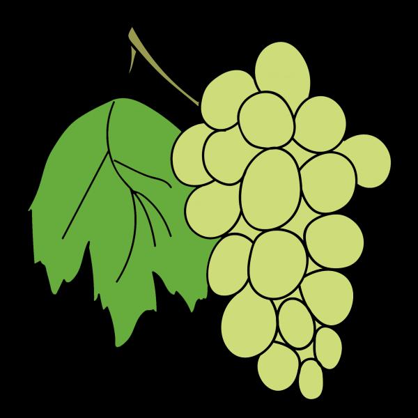 Виноград нарисовать поэтапно с детьми